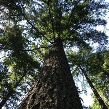 Another tree hugger's view (Erica Timm)