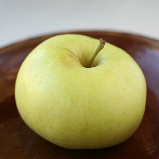 Apple 'Chehalis' Semi-dwarf