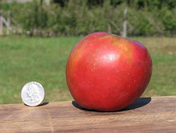 Apple 'Enterprise' Semi-dwarf