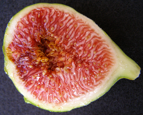 Fig 'King'