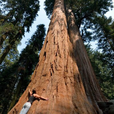 Jenny's Tree! — with Jenny Bedell-Stiles.